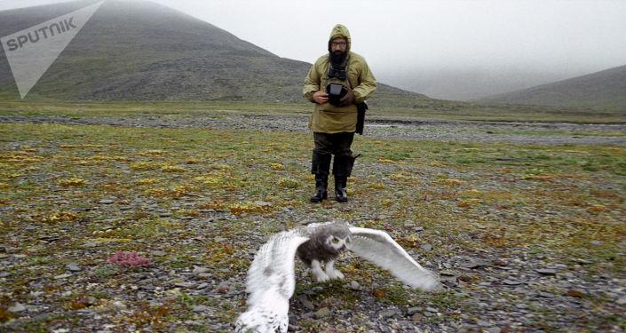 Biologo al lavoro al parco dell'isola di Wrangel