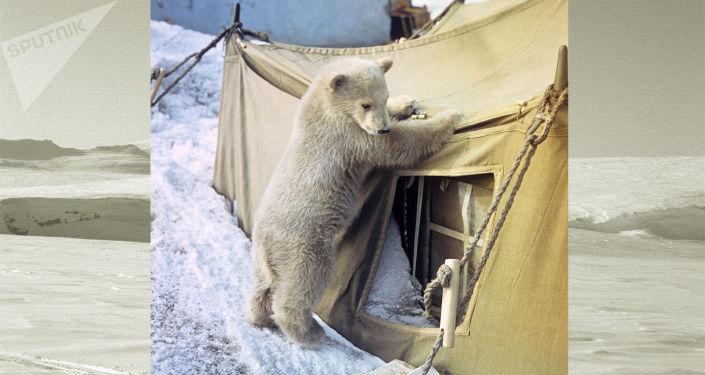 Giovane orso troppo curioso