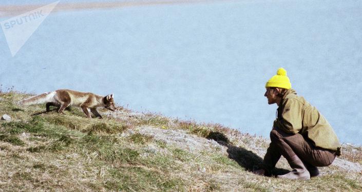 La volpe artica e il biologo (1989)