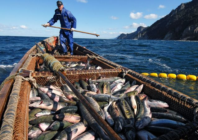 Pesca ricca all'isola Kunashir