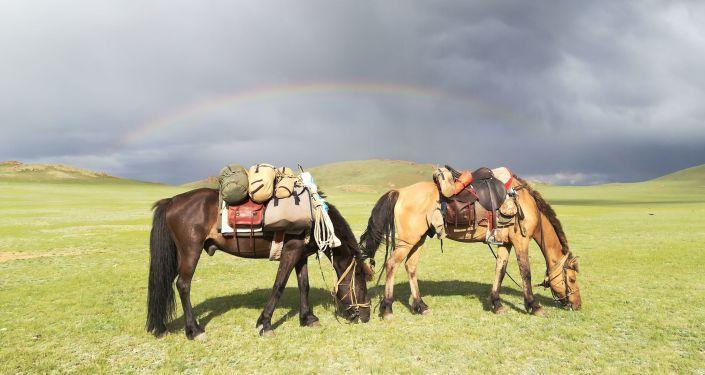 Un viaggio da sogno – dalla Mongolia alla Polonia a cavallo