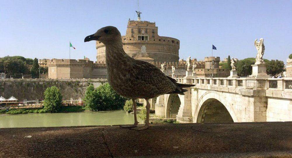 Un gabbiano a Roma