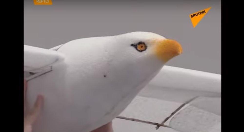 Cina: presentato un robot-uccello incredibilmente realistico