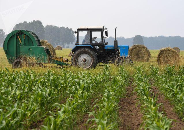 Contadino sul trattore nel campo agriolo