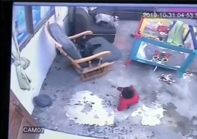 Colombia: bambino quasi cade dalle scale, il gatto lo salva