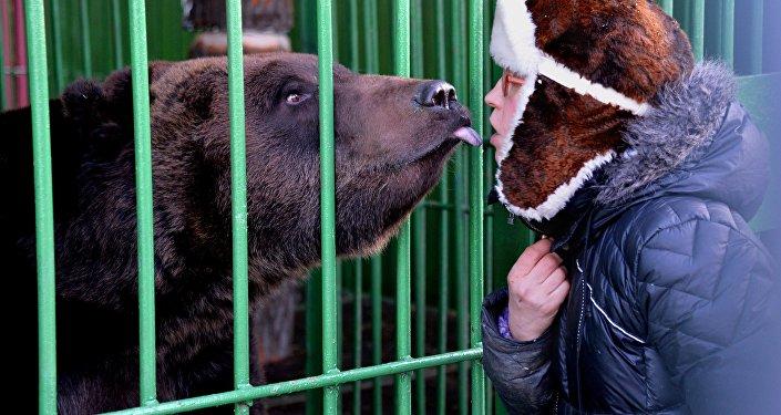 Un orso scambia tenerezze con una persona