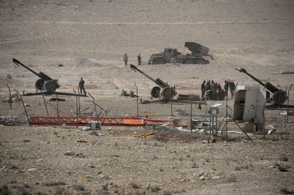 Falchi del deserto a pochi passi dal centro di Palmira.