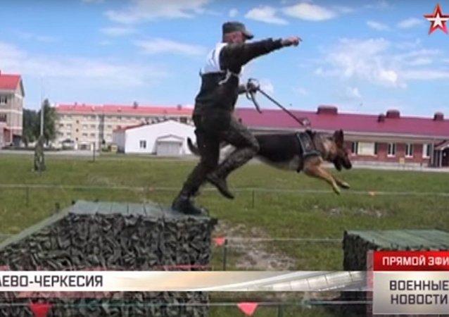 Allenamento dei cinofili dell'esercito russo