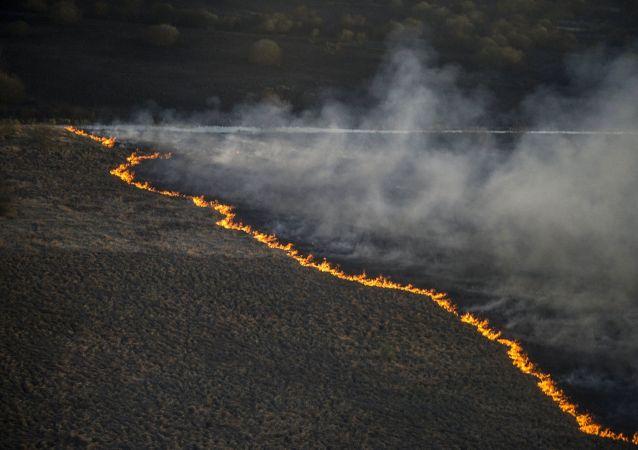 Incendio del bosco in Ucraina