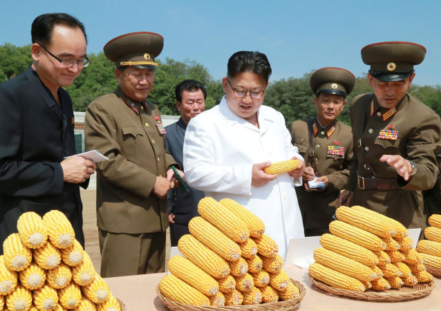 Maiali, mele e mais: un giorno da contadino per Kim