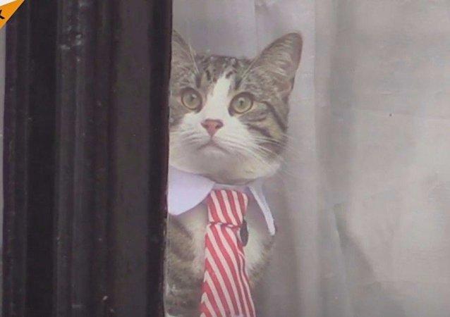 Embassy cat