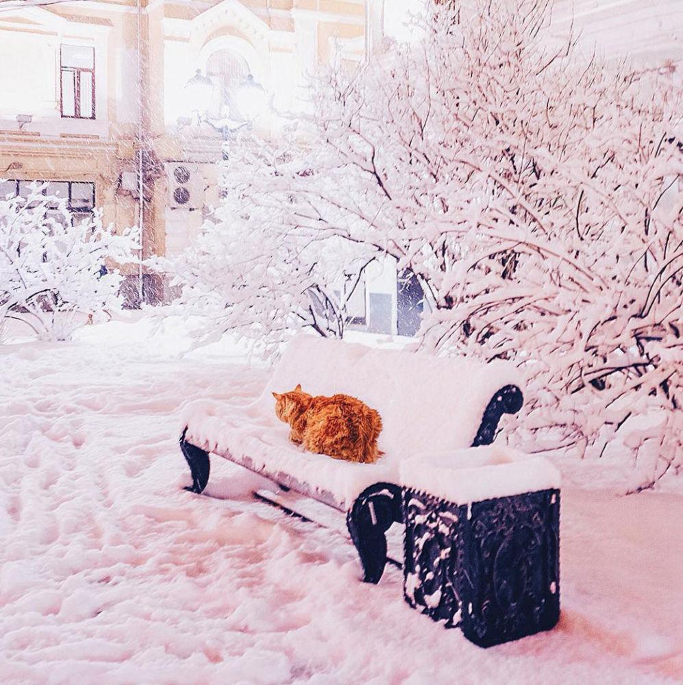 La gatta della fotografa.