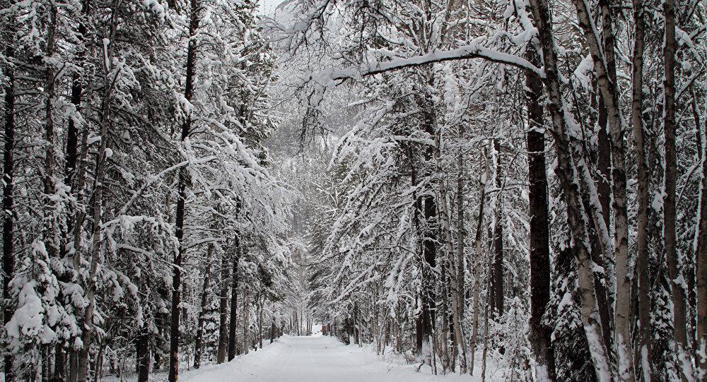 Una foresta d'inverno