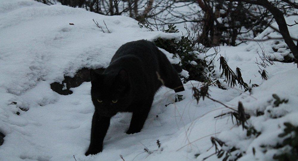 Il gatto di Vladislav Evglevskij