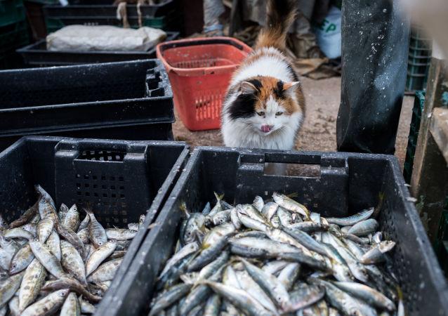 Корзины с рыбой во время прибрежного лова черноморской рыбы в Севастополе
