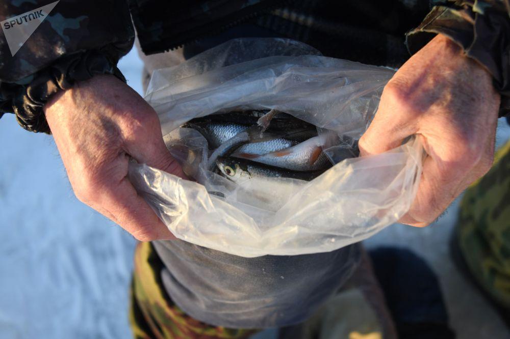 Pesca sotto il ghiaccio sul fiume Tom'