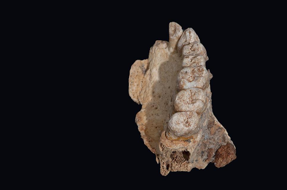 Il frammento di mascella trovaeto in Israele