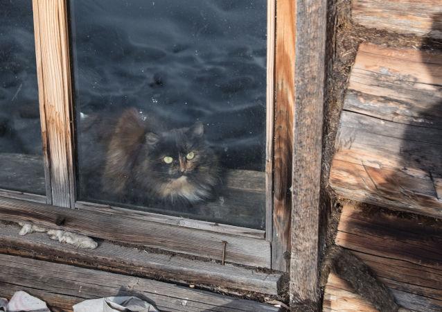 Una gatta