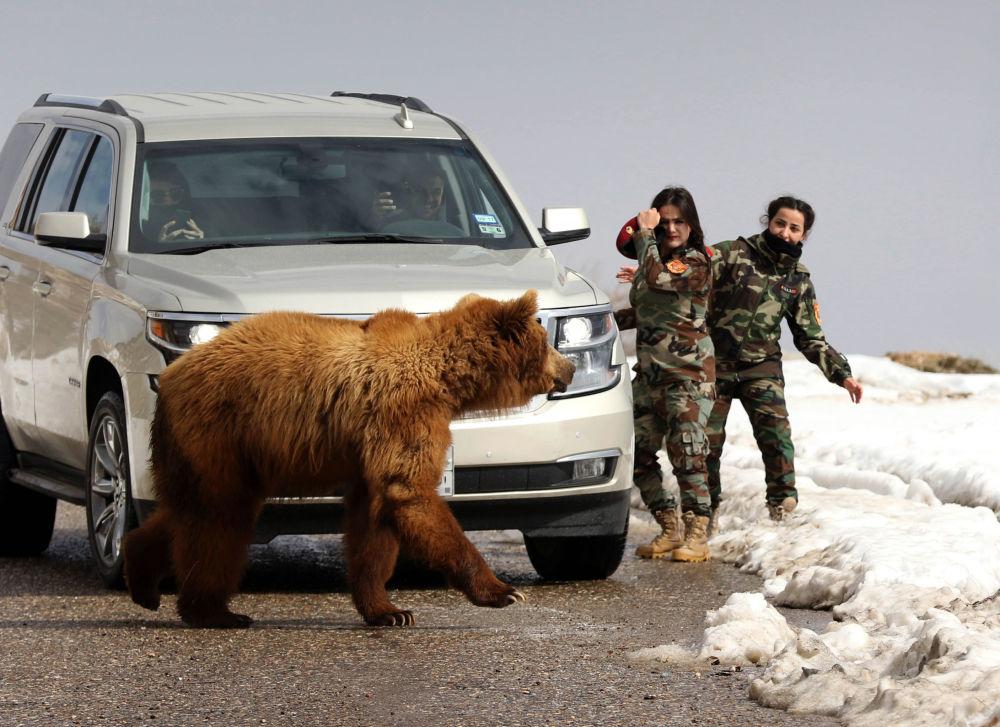 Donne militari curde peshmerga e giornalisti lasciano andare un orso salvato dagli attivisti.