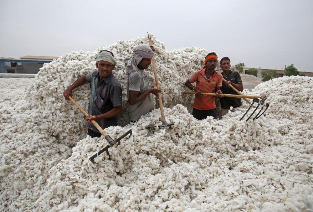 I lavoratori scaricano il cottone dal camion nella città indiana di Kadi.
