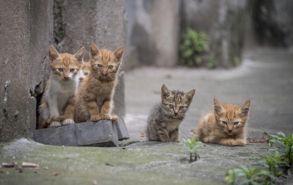 Cinque gattini in una via nel quartiere residenziale a Shanghai, Cina.