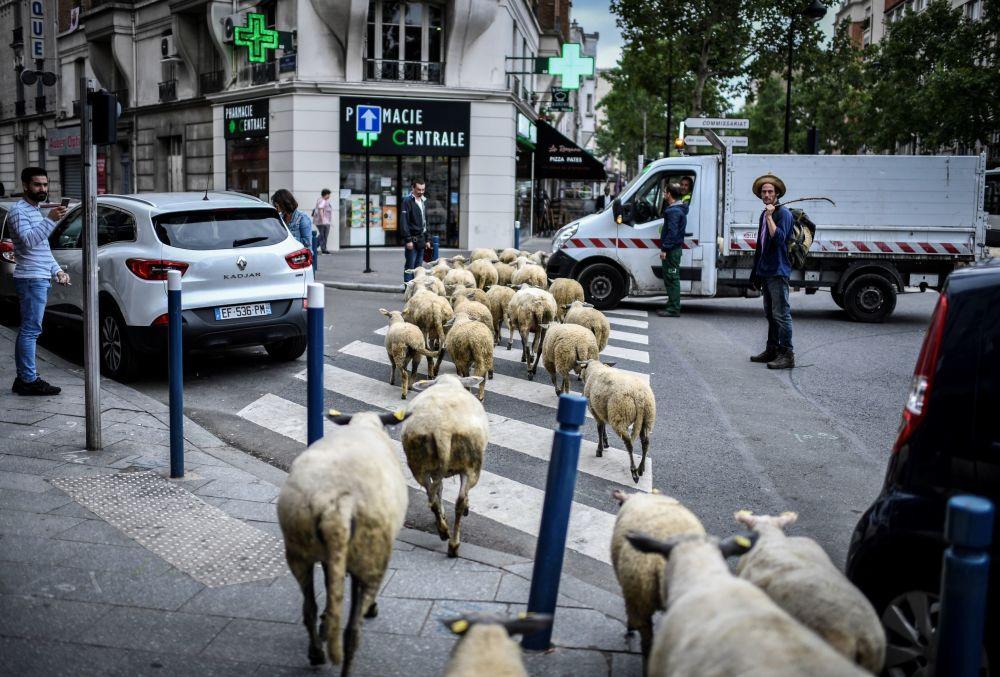 Un fattore nei pressi di Parigi.