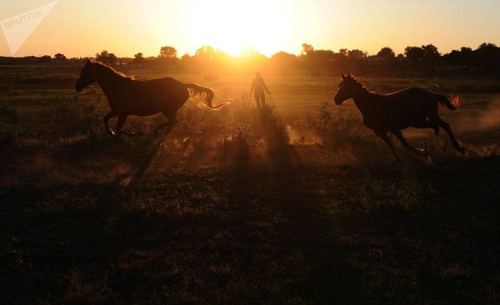 Cavalli nella regione di Rostov.