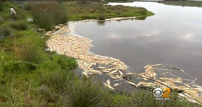 """California: migliaia di pesci sono """"bolliti"""" a causa del caldo anomalo"""