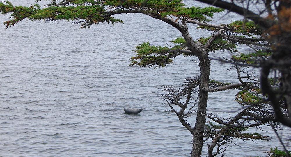 L'isola Chakmut