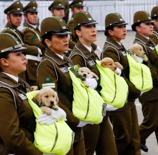Parata militare in Cile: cani ufficiali con le scarpe a causa del maltempo