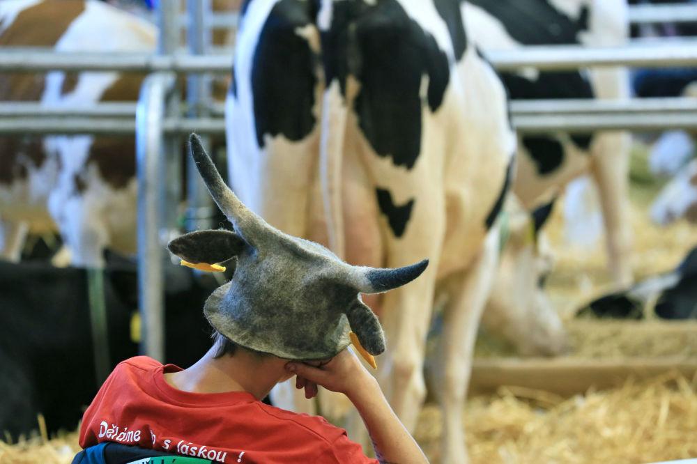 Un ragazzo con cappello con le corna alla fiera nazionale del bestiame a Brno, Repubblica Ceca.