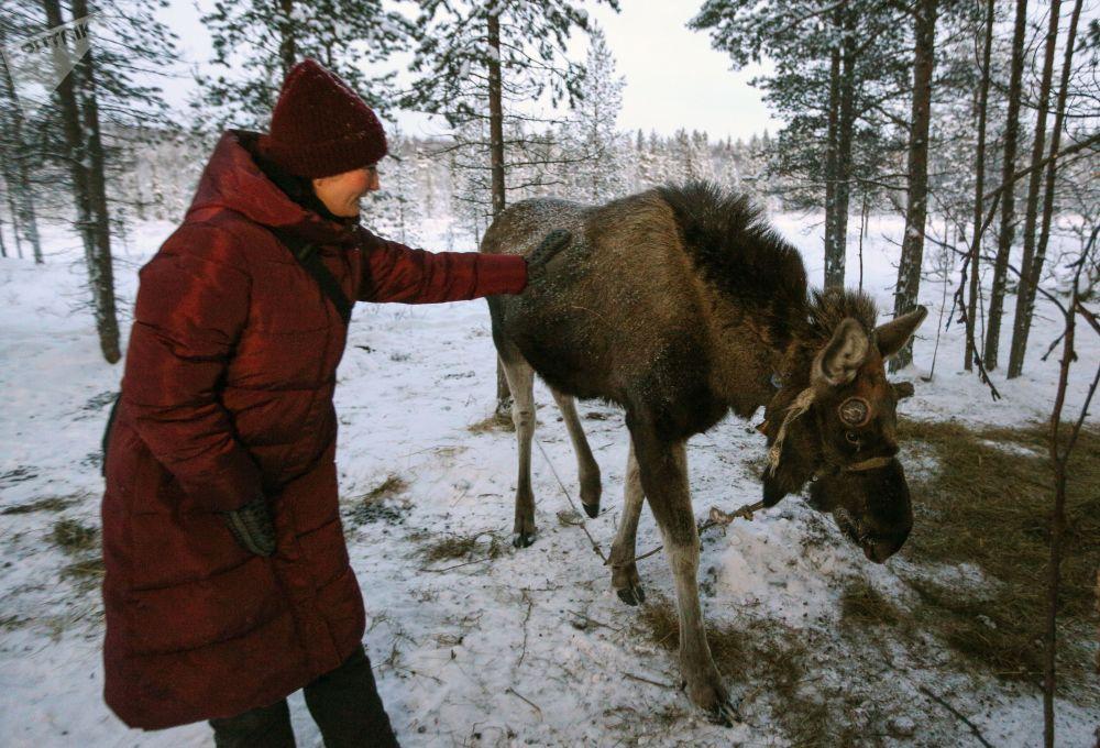 Villaggio dei sami nella regione di Murmansk.