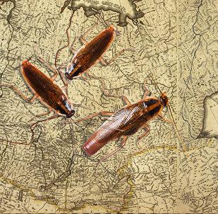 Gli scarafaggi