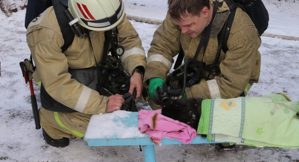 Dei soccorritori a Smolensk hanno rianimato un gatto da un incendio