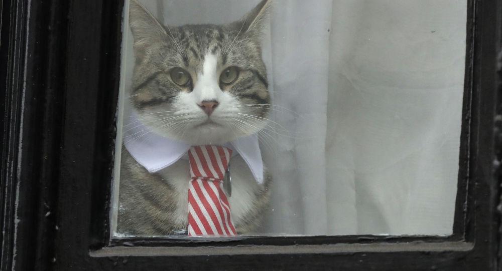 Il Gatto Di Assange Guarda Il Suo Padrone Arrestato Al Telegiornale