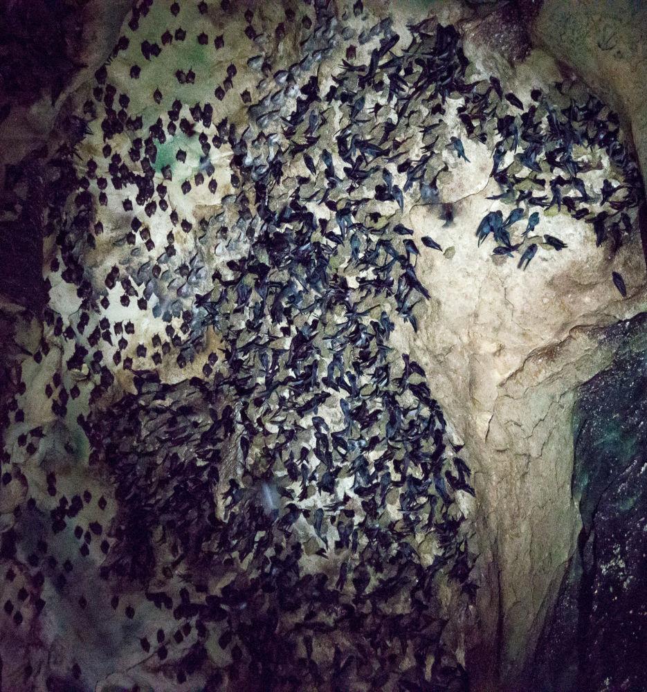 Le grotte di Gomantong in Malesia