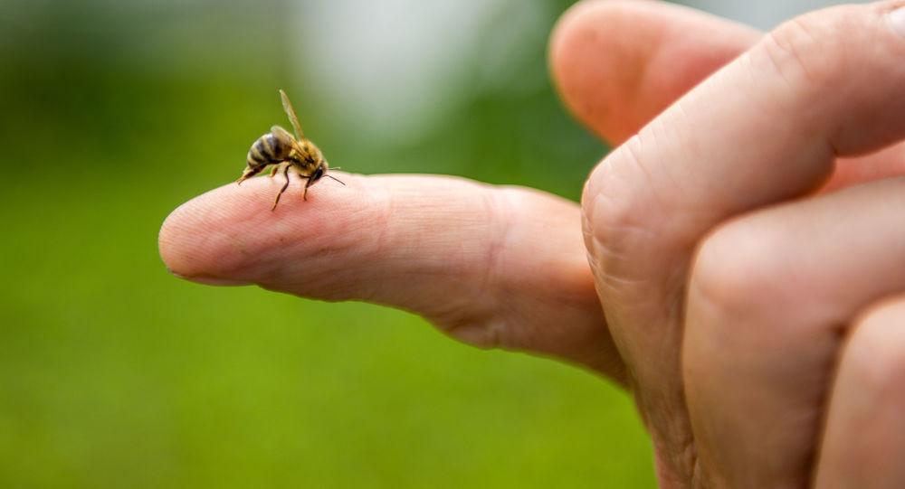 Un'ape