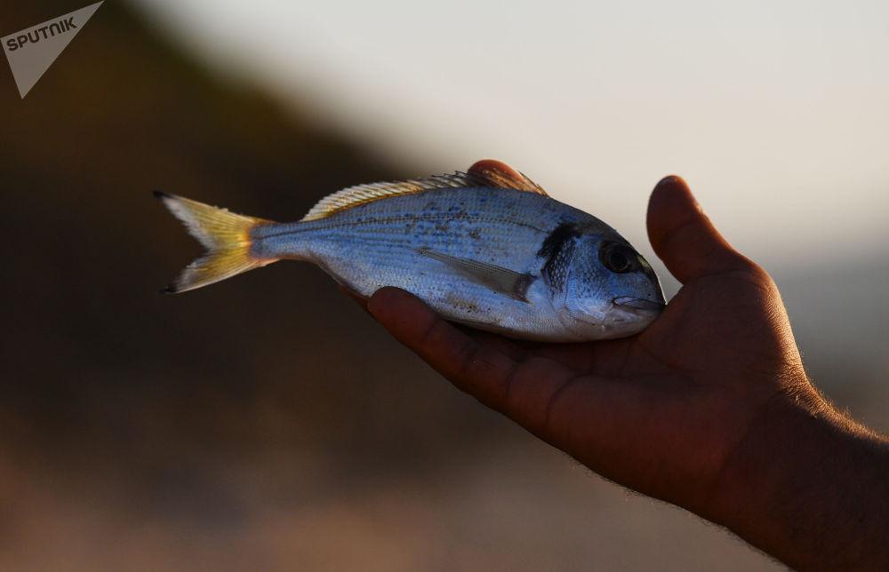 Un pesce appena pescato nelle mani di un pescatore sulla spiaggia dell'hotel La Cigale, a Tarabka, in Tunisia