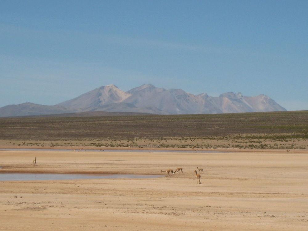 L'Altiplano, le Ande centrali.