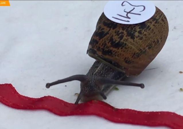 Campionato del mondo di corsa tra le lumache