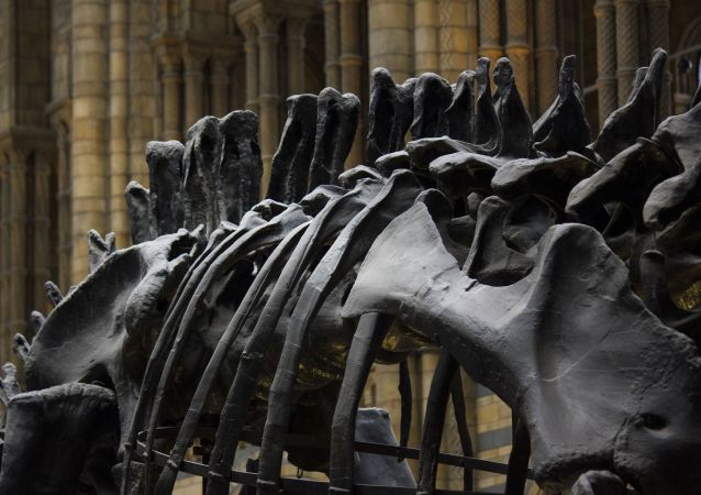 Scheletro di dinosauro in museo