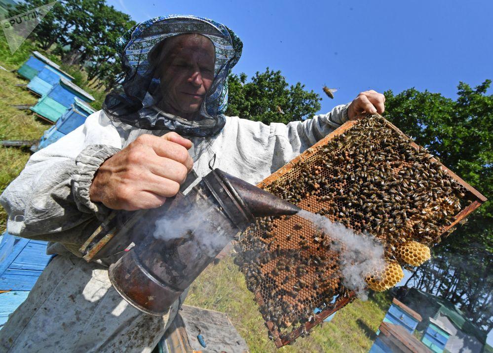 Raccolta del miele nel villaggio di Rakovka, vicino a Vladivostok
