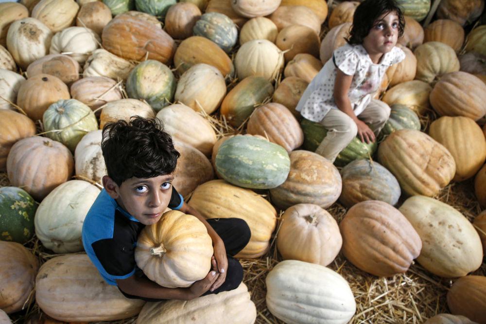 Bambini palestinesi tra le zucche in un capannone a Beit Lahia, nella Striscia di Gaza