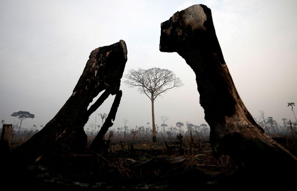 Il presidente francese Emmanuel Macron ha definito gli incendi boschivi in Brasile una crisi internazionale.