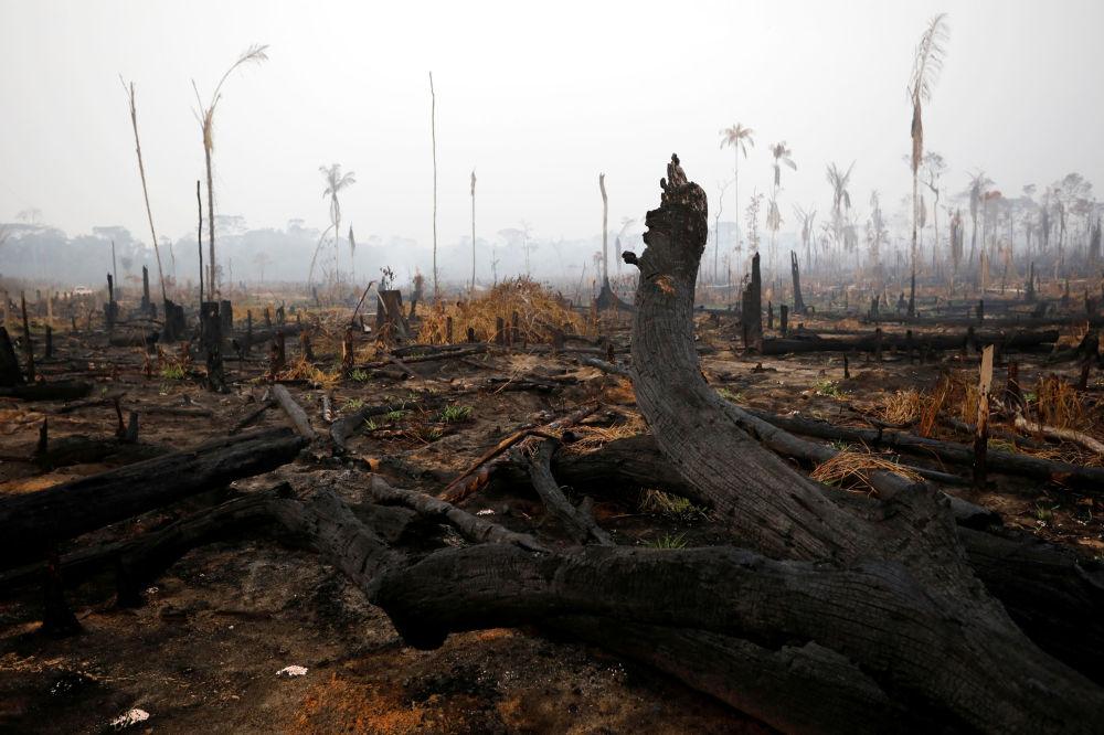 Numerosi leader europei hanno accusato degli incendi il presidente brasiliano Jair Bolsonaro e il suo governo.