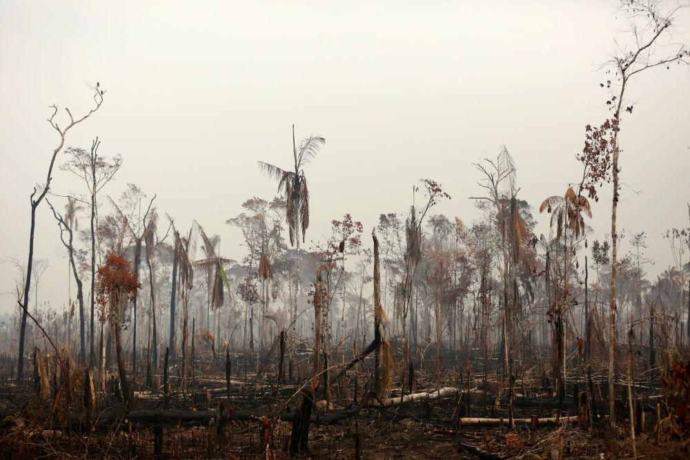 In particolare, gli ambientalisti di Greenpeace associano l'aumento del numero di incendi alla politica di Jair Bolsanaro e alla deforestazione col fine liberare l'area per lo sviluppo delle imprese minerarie o di terra coltivabile per le aziende agricole.