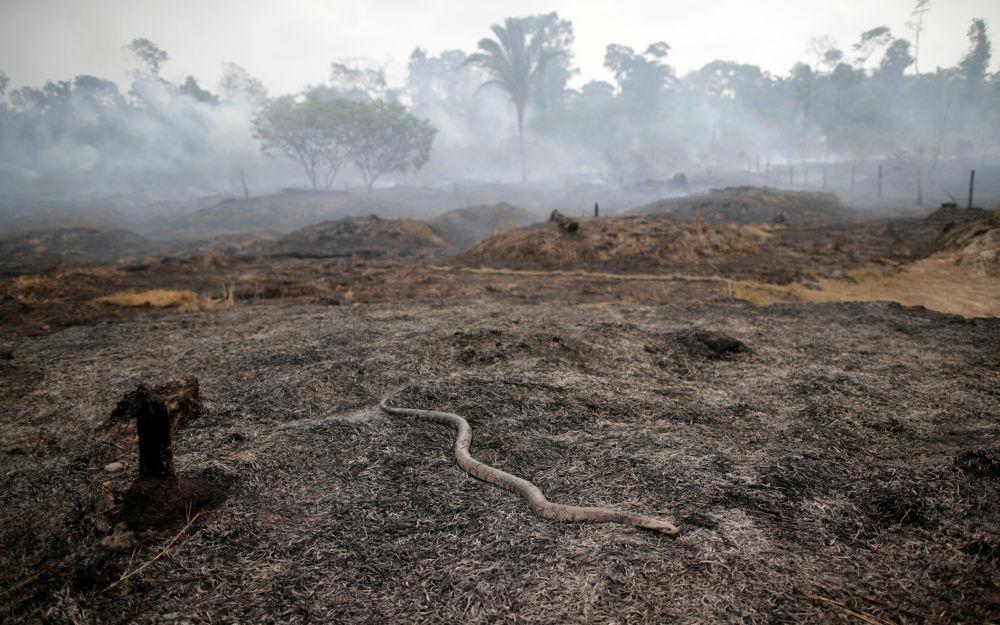 Sostengono che il leader brasiliano abbia descritto la protezione delle foreste tropicali come un ostacolo allo sviluppo economico.