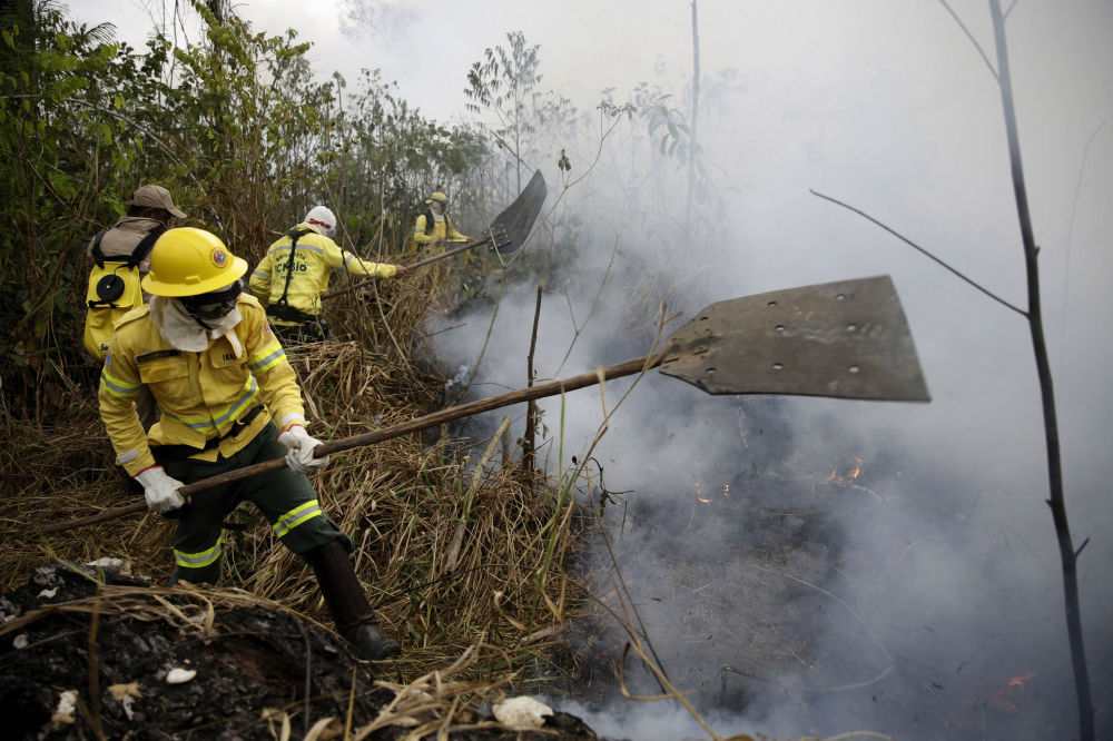 Ma durante questo periodo sono già stati fatti dei danni irreparabili alle foreste.