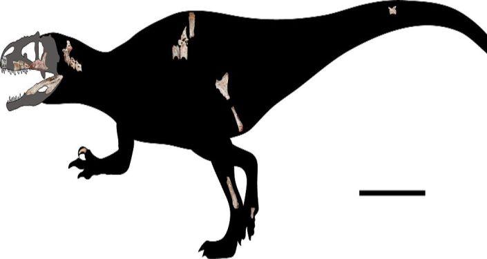 Fossili di dinosauro predatore gigante scoperti in Thailandia