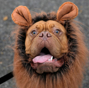 I partecipanti all'annuale Halloween Dog Parade di New York